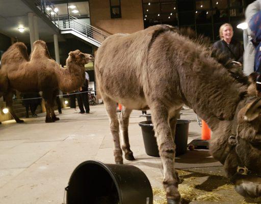 Camel at IDA Culture Night 2018