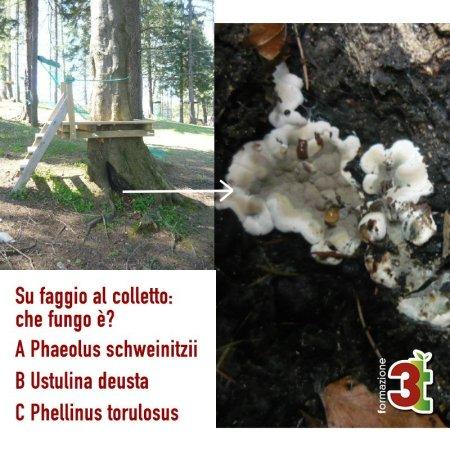 Quiz-Funghi-2