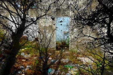 post biennale venezia arte natura e cambiamenti in una foto porta
