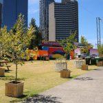 tree wooden planter event plants hire melbourne