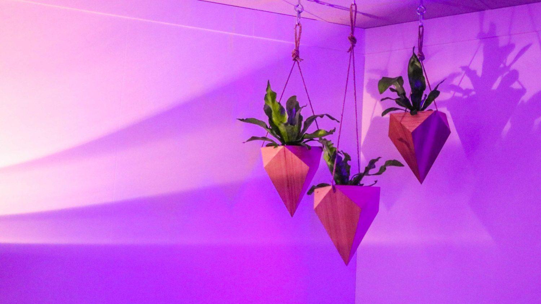 wooden hanging pots event plants hire melbourne