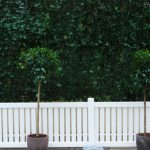 Topiary ivy wall event plants hire melbourne