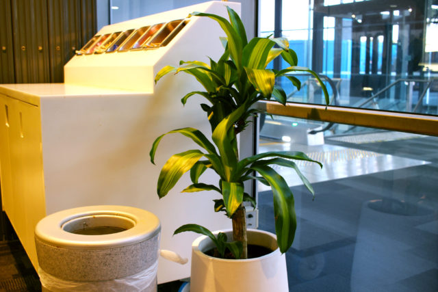 Event Plants Gallery Your Inspiration Destination