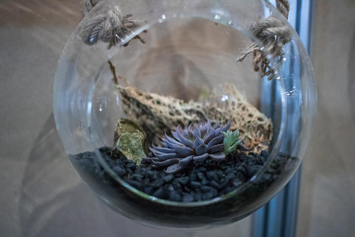 Hanging Terrariums Event Plants Hire Melbourne