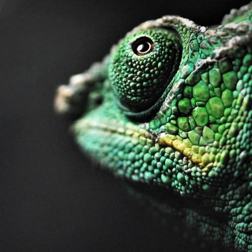 biodiversity-day-caro