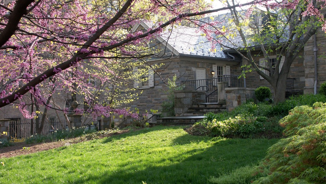 a redbud tree and green bushes in the foreground, grass, and a stone building behind