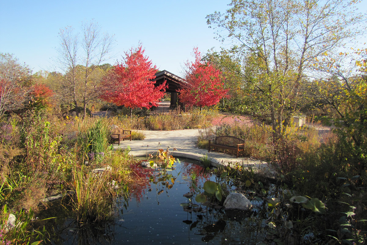 Independence Grove Native Garden in Fall