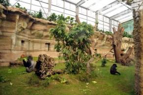 gorillaerne