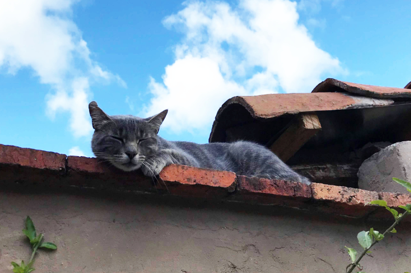 Krafttier Katze Merlin Ecuador