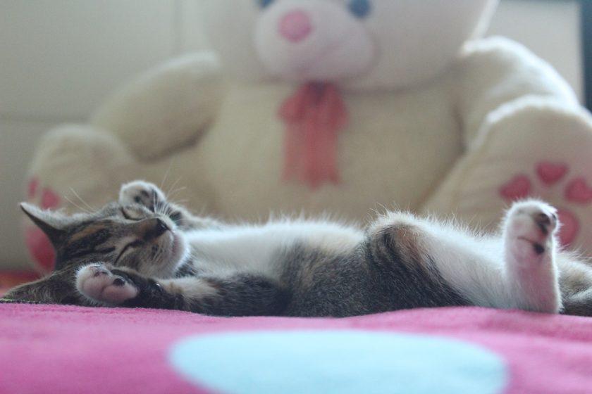 Krafttier Katze Meditation