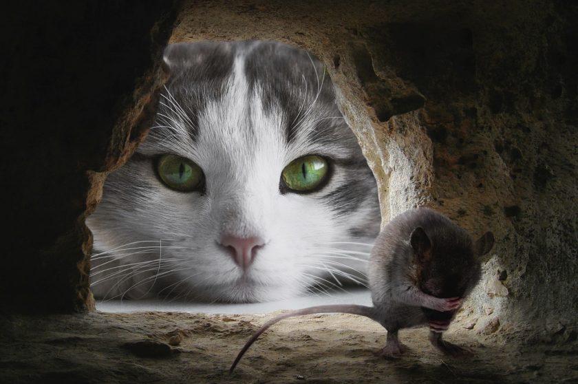 Krafttier Katze vor Mauseloch