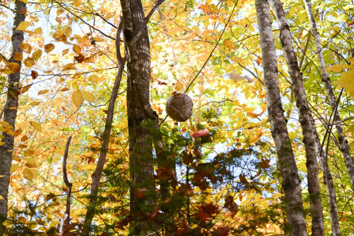 marking-maples-1164