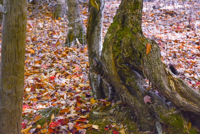 marking-maples-1165