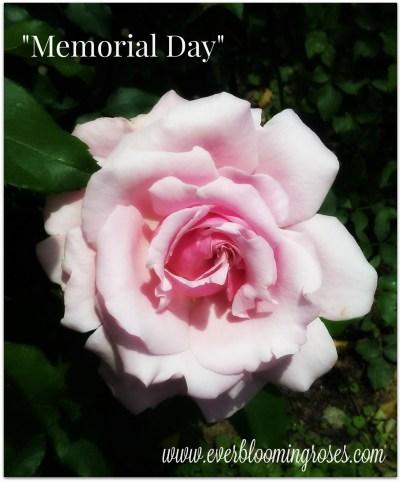 MemorialDay.5.29.16.web