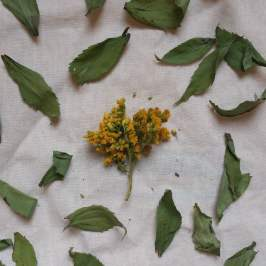 These herbal resources have helped me learn and grow tremendously as an herbalist.