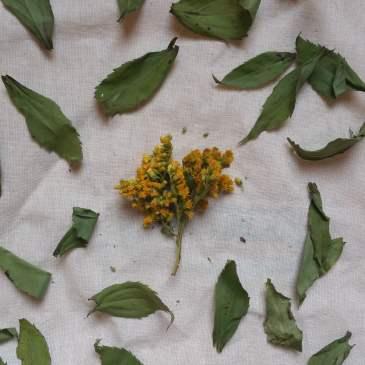 How to Learn Herbalism – Herbal Resource List