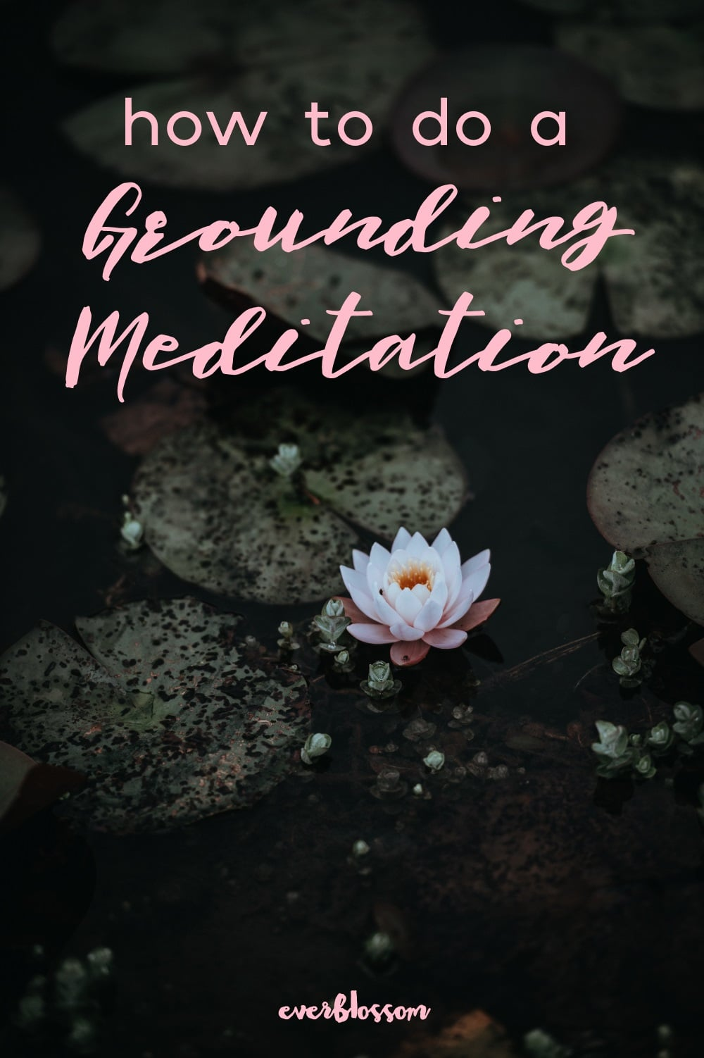 Lotus flower with caption: how to do a grounding meditation