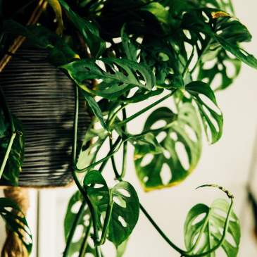 7 home hacks that really improve your mental health