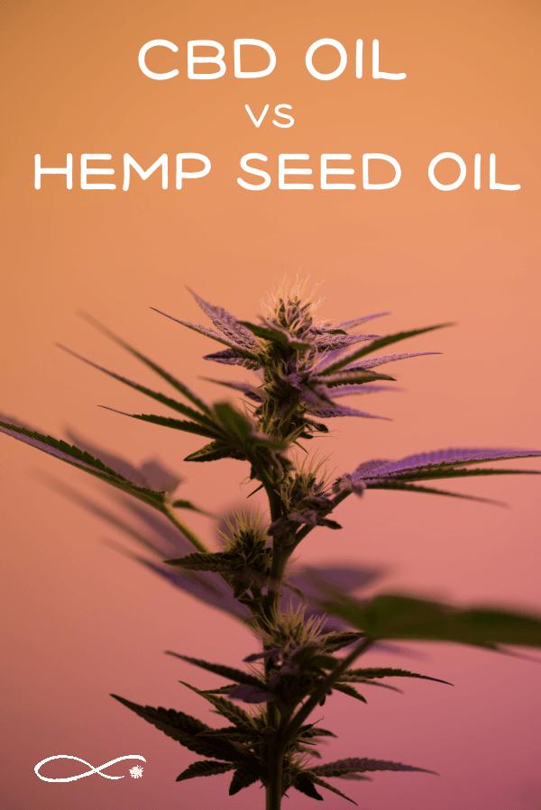 """Cannabis plant with caption: """"CBD oil vs Hemp Seed Oil"""""""