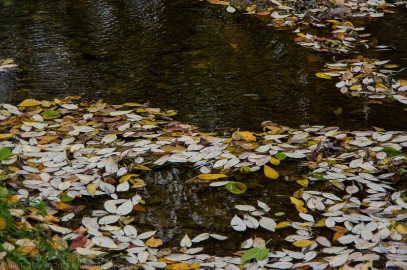 141014-141643_Plum Creek