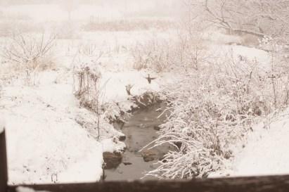 150122-074140_Plum Creek