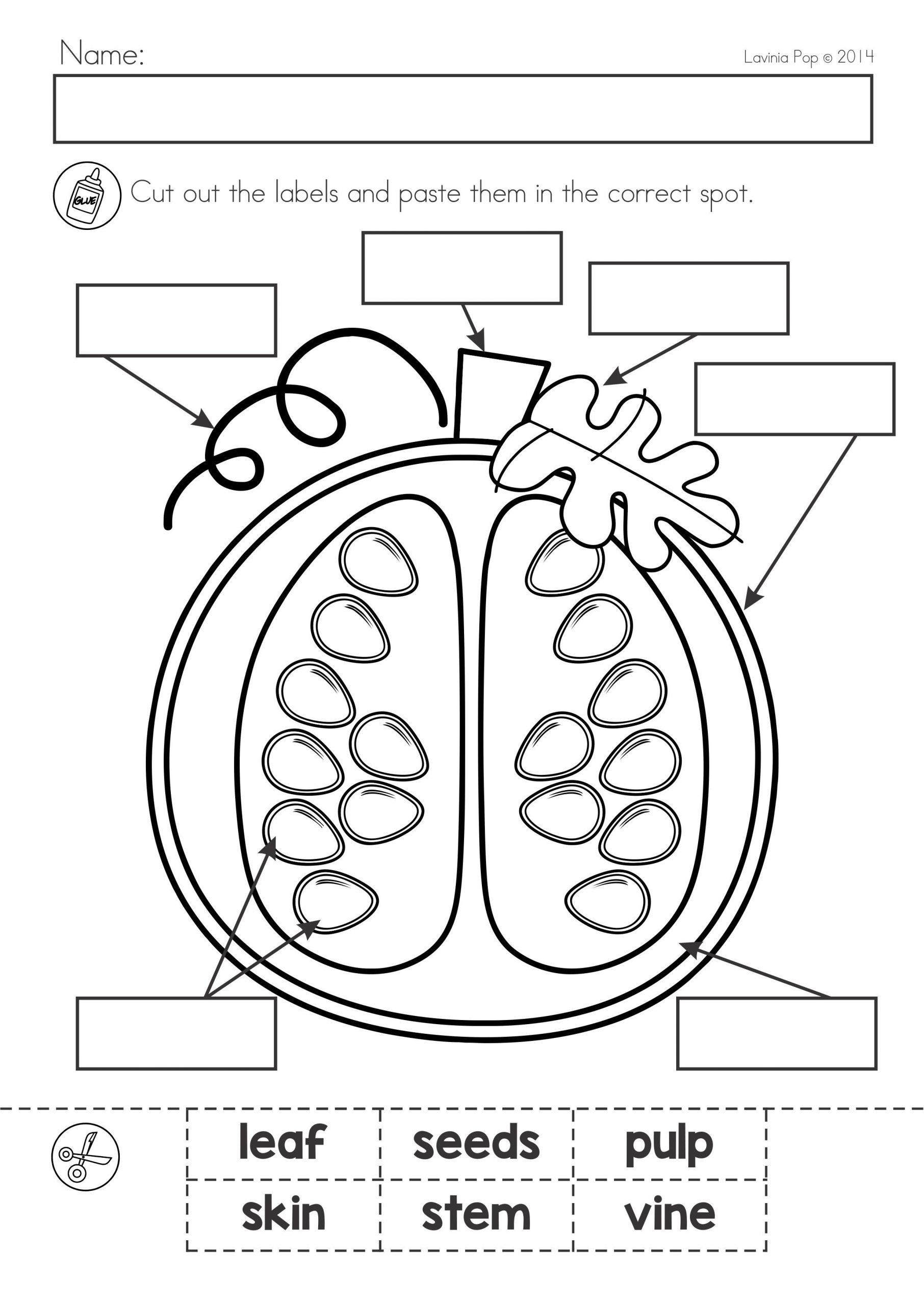 Labeling Worksheet For Kindergarten Worksheet For