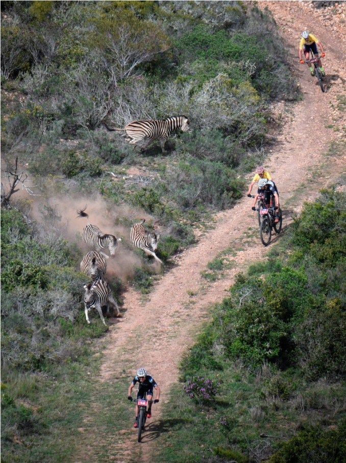 The leading men – Nico Bell, Gawie Combrinck, Matt Beers and Alan Hatherly – have a wildlife close encounter during the 2017 Momentum Health Cape Pioneer Trek, presented by Biogen. Photo by Zoon Cronje.