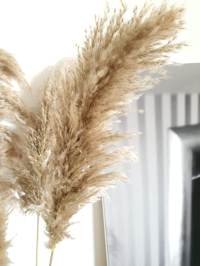 """""""The Nature Pampas - Superfluffy"""""""