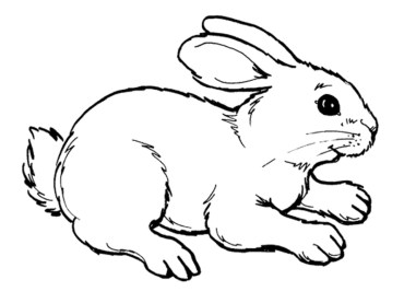 Online Rabbit Coloring Pages for Kids OS92R