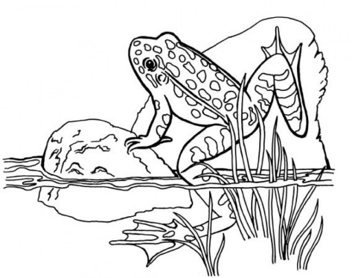 Preschool Frog Coloring Pages to Print 4ABJZ