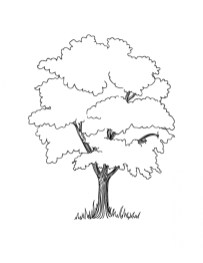 Preschool Tree Coloring Pages to Print 4ABJZ