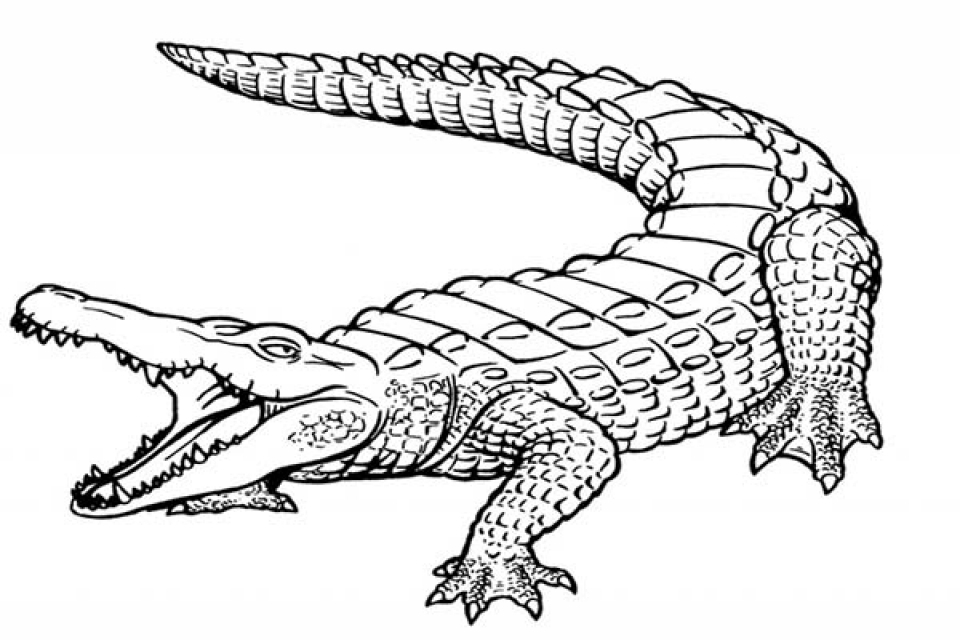 Alligator Coloring Pages Printable for Kids   r1n7l