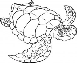 Easy Turtle Coloring Pages for Preschoolers 9iz28