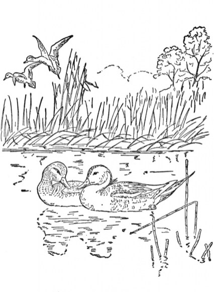 Free Preschool Nature Coloring Pages to Print p1ivq