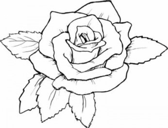Free Roses Coloring Pages for Adults to Print 12490