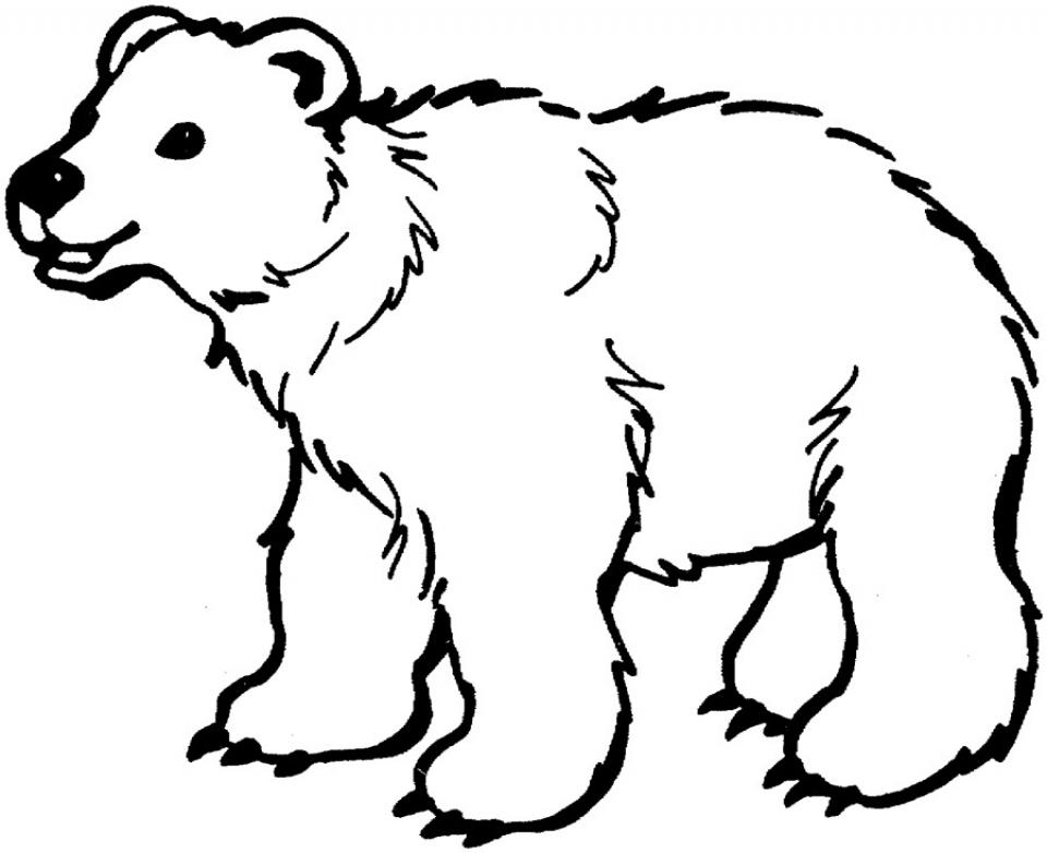 Online Polar Bear Coloring Pages for Kids   sz5em