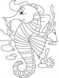 Online Seahorse Coloring Pages 83723