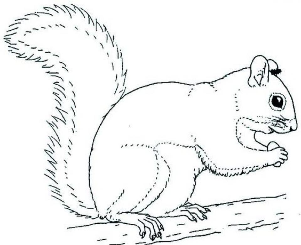 Online Squirrel Coloring Pages for Kids   sz5em