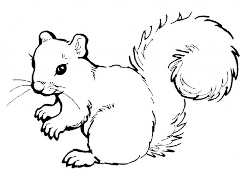Preschool Printables of Squirrel Coloring Pages Free   b3hca