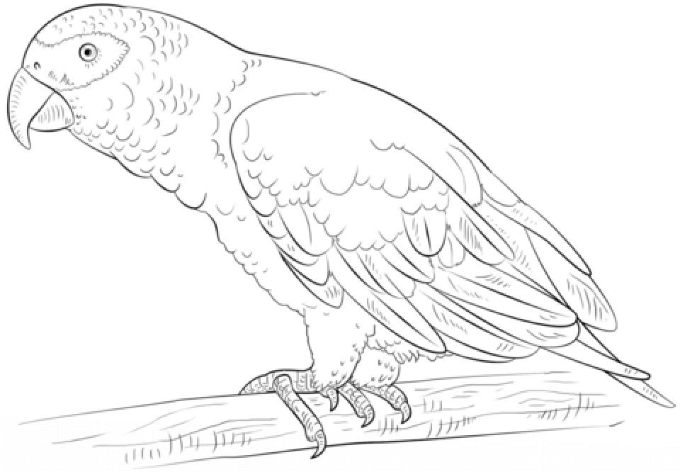 Printable Parrot Coloring Pages 63679