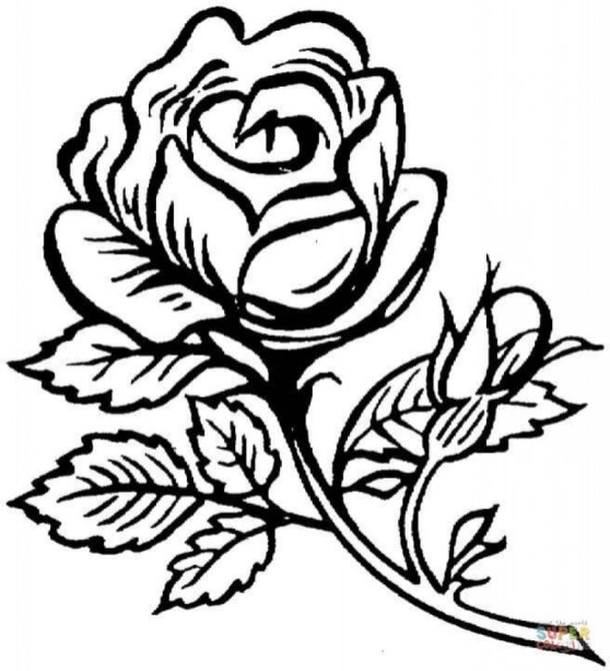 Printable Roses Coloring Pages for Adults 29255