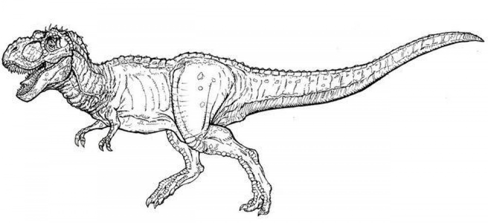 Printable T Rex Coloring Pages   87141