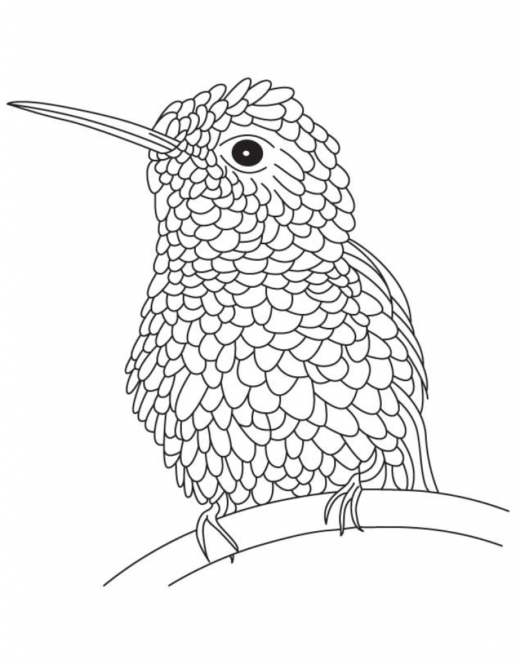 Hummingbird Coloring Pages Free Printable   68103