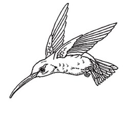 Hummingbird Coloring Pages Free Printable 80226