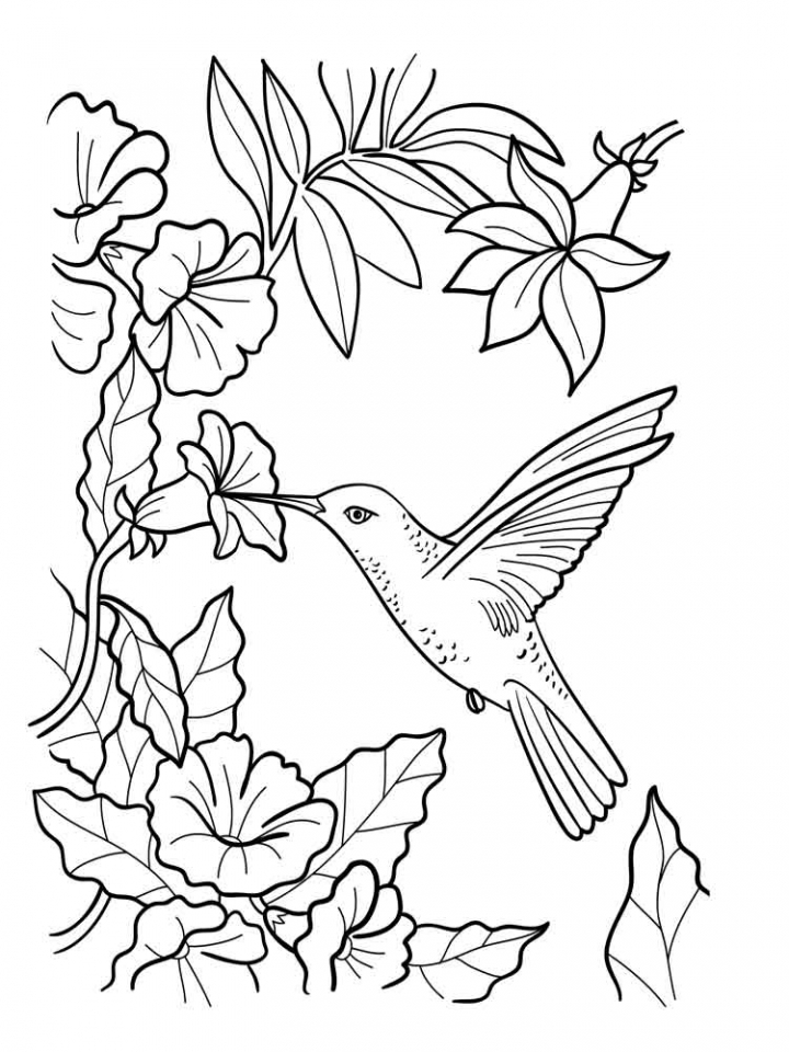 20+ Free Printable Hummingbird Coloring Pages - EverFreeColoring.com