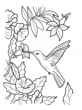 Online Hummingbird Coloring Pages 10437