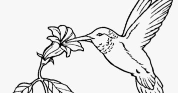 Online Hummingbird Coloring Pages 50959