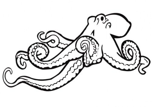 Online Octopus Coloring Pages jzj9z
