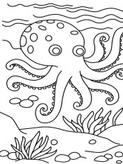 Printable Octopus Coloring Pages p79hb