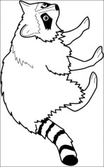 Raccoon Coloring Pages Free Printable 80226